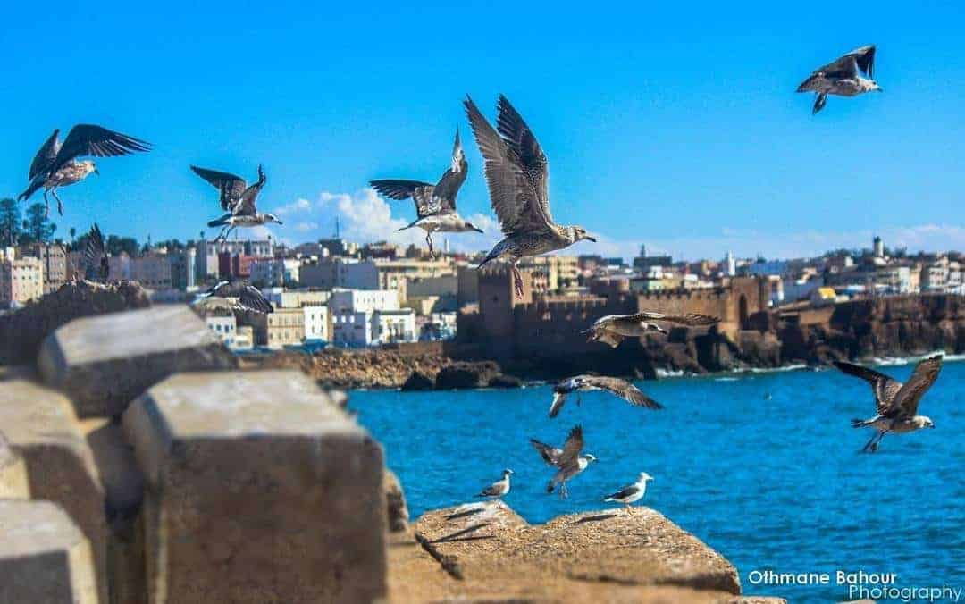 Gorgeous sunny Safi coast with ancient ramparts and birds