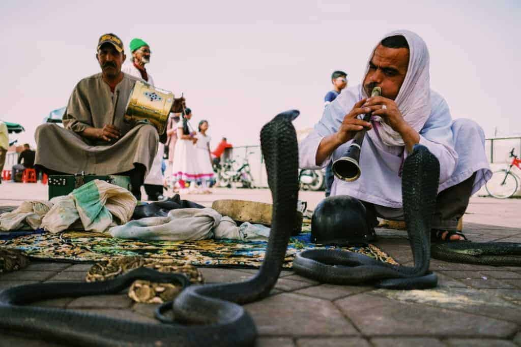 famous snake charmers marrakech