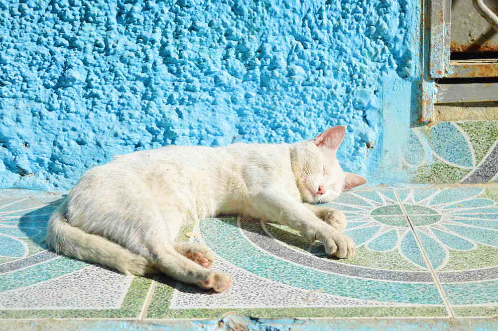 moroccan cat in the sun