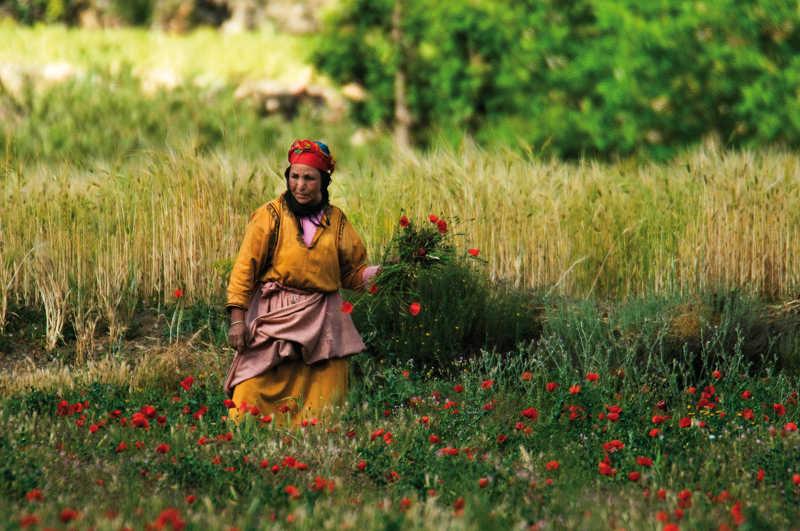 toubkal flowers