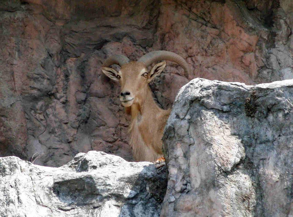 toubkal national park wildlife