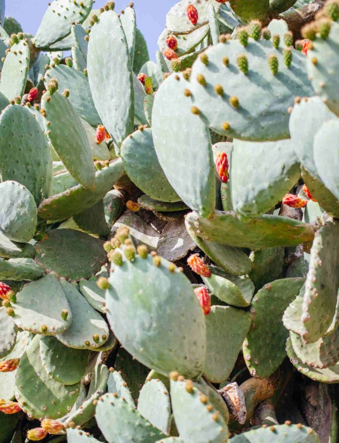 Why Hair and Skin Need Prickly Pear Seed Oil